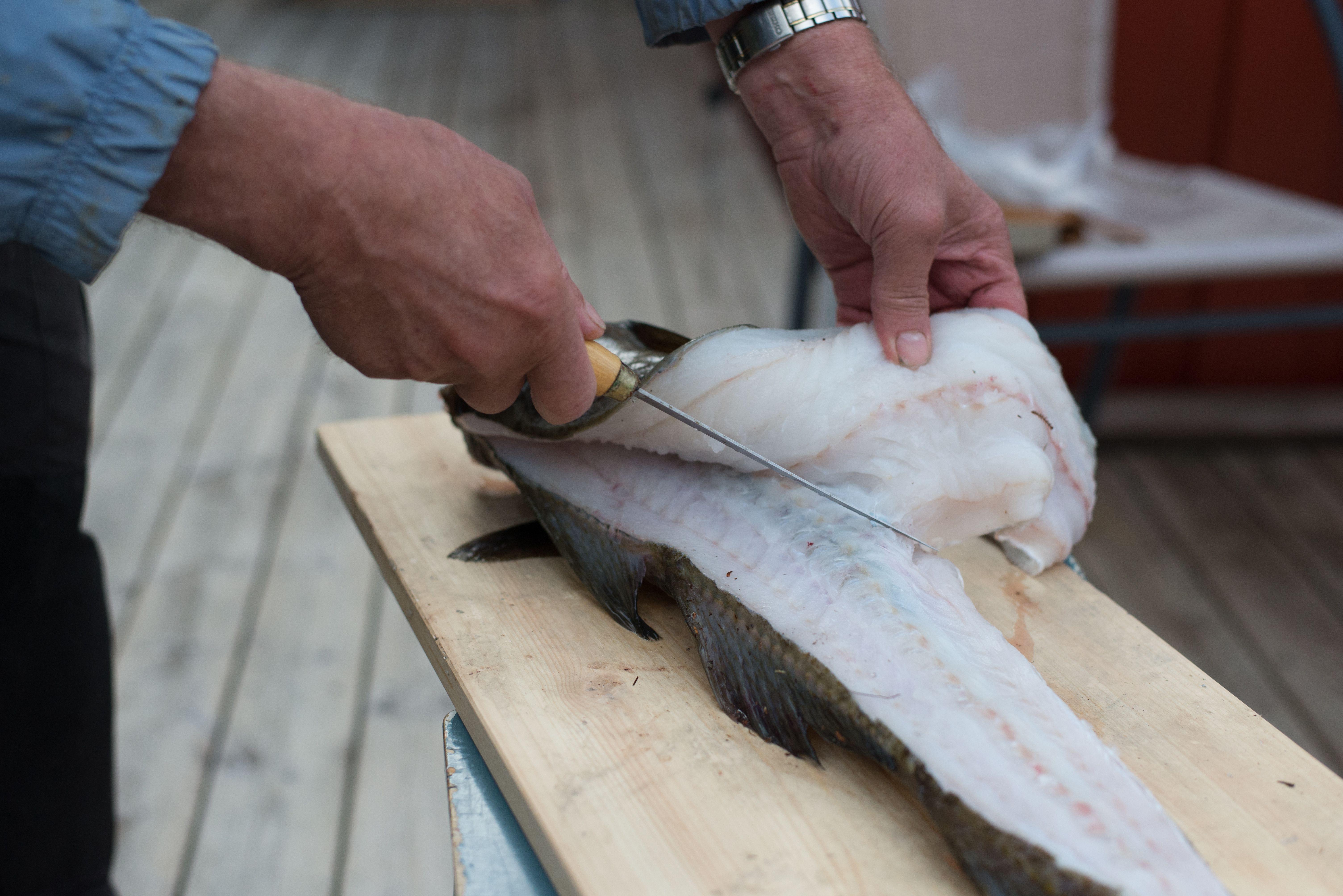 hvordan fiske laks i sjøen